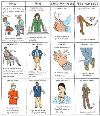 body_language_tips_dolphins_group_training